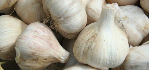 china-garlic-cc