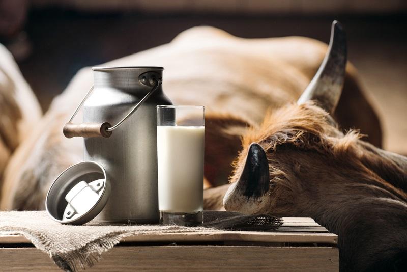 რატომ უნდა გამოვიყენოთ ხაჭო და არაჟანი: დილით, შუადღით, საღამოს და ძილის წინაც კი.