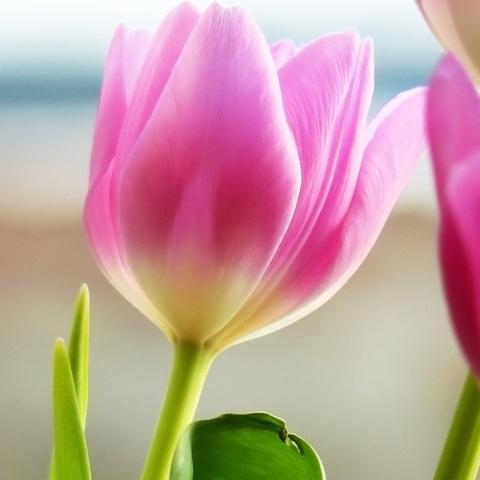 ტესტი: თქვენთვის ყველაზე ლამაზი ყვავილი თქვენი პიროვნების საოცარ საიდუმლოს გამოაჩენს!