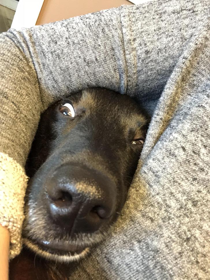 ეს 25 ძაღლი პატრონებმა ყველაზე უცნაურ პოზებში გამოიჭირეს