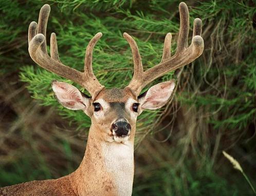 რომელი ცხოველი განასახიერებს თქვენს ზოდიაქოს ნიშანს? ის თქვენს სულს იცავს.