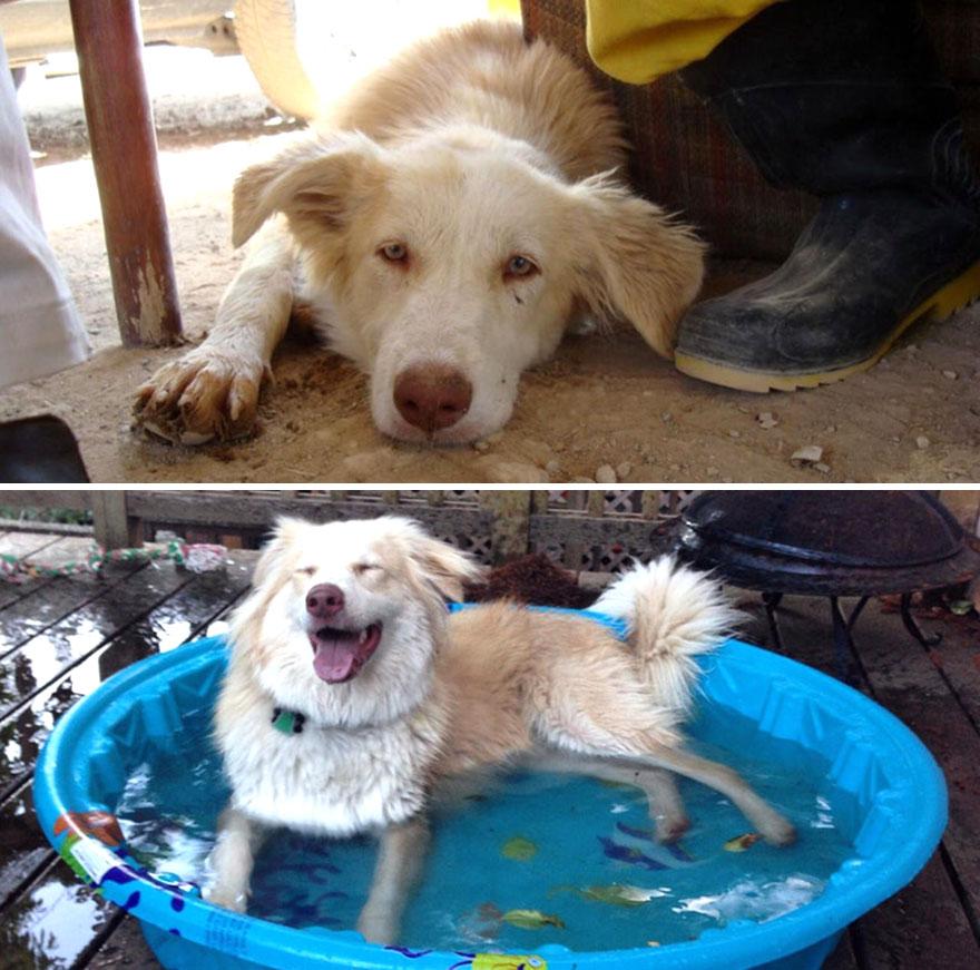 ძაღლების 30 ფოტო, რომლებიც მათ ოჯახში აყვანამდე და აყვანის შემდეგ გადაუღეს
