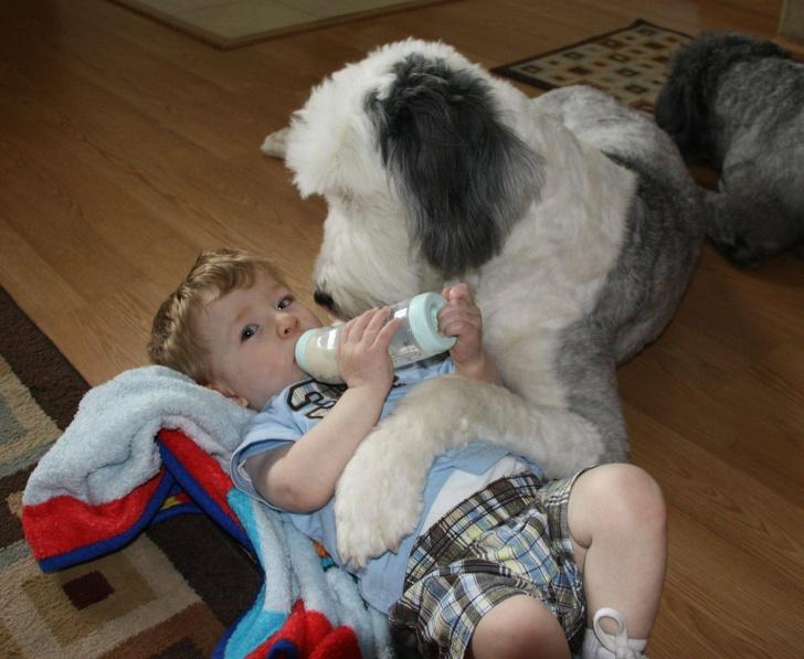 ეს 20 ფოტო ამტკიცებს, რომ ცხოველები საუკეთესოდ იცავენ ბავშვებს