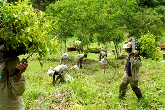 ბრაზილიელმა ფოტოგრაფმა და მისმა მეუღლემ განადგურებული ტყის გადასარჩენად 2 მილიონი ხე დარგეს... ნახეთ ფოტოები!