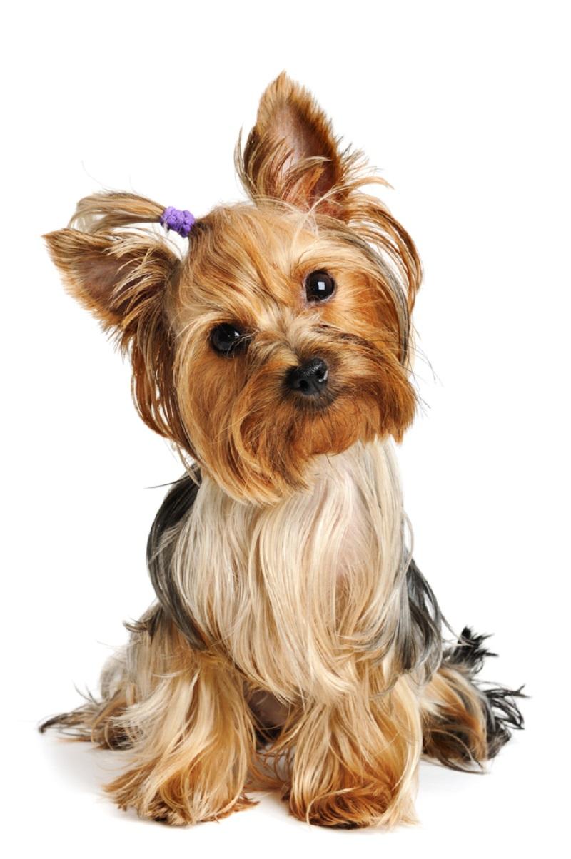 ტესტი: აირჩიე ძაღლი, რომელიც მოგწონს და გაიგე, როგორ მამაკაცს იმსახურებ ცხოვრებაში.