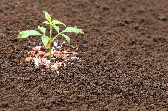 რომელი სასუქები გამოვიყენოთ გაზაფხულზე: ბაღის, ბოსტნის, საყვავილეს კვება