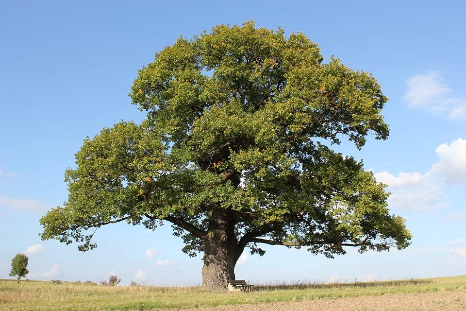 ტესტი: რას ამბობს თქვენზე თქვენი დაბადების დღის ხე?