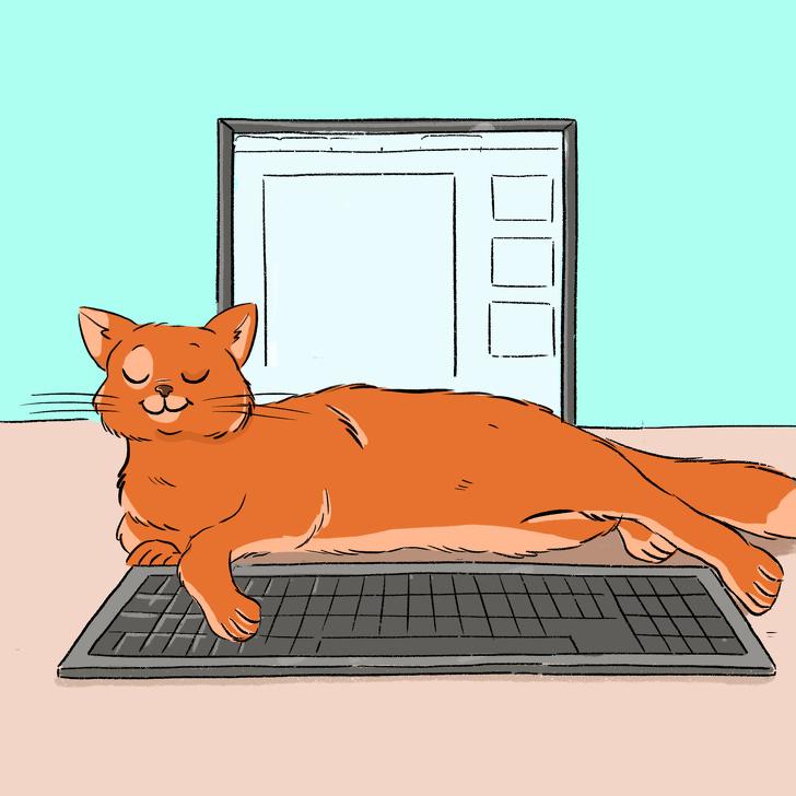ამ 13 ჟესტის გამოვლენით შენი კატა გეუბნება, რომ ძალიან უყვარხარ