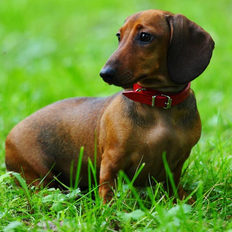 რომელი ჯიშის ძაღლი ხართ ზოდიაქოს ნიშნის მიხედვით?