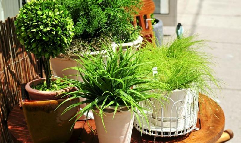 ეს რეცეპტი მეზობელმა აგრონომმა მასწავლა. მცენარეების 2-ჯერ სწრაფად იზრდებიან. აიღეთ ...