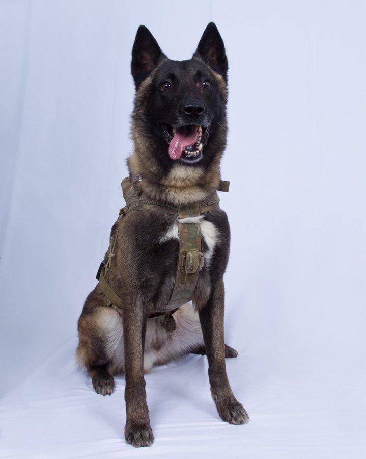 მსოფლიოს ყველაზე ცნობილი ტერორისტი გაბედულმა ძაღლმა გამოიჭირა