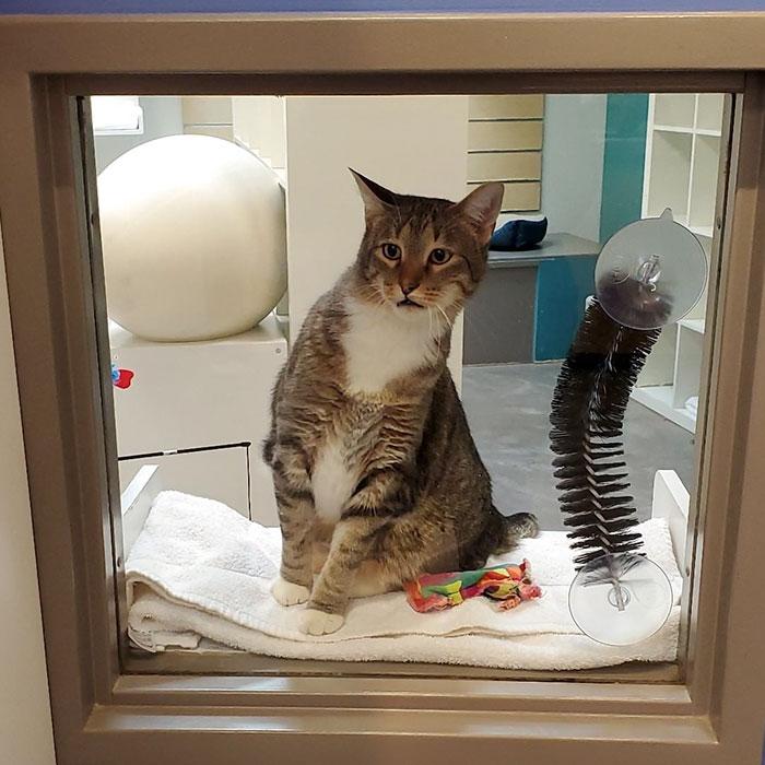 კრიმინალი კატა დაპატიმრებულია. მან დანაშაული უკვე აღიარა.