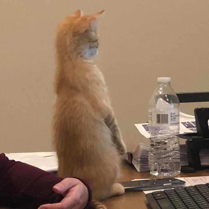 კომპანიამ ოფისისთვის 2 კნუტი აიყვანა, დებეტი და კრედიტი, რათა თანამშრომელთა განწყობა აემაღლებინა (21 ფოტო)