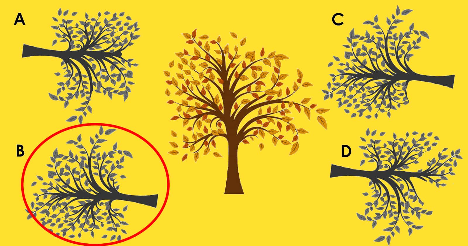 ტესტი: შეგიძლიათ ფოტოზე მოცემული ხის ნამდვილი ჩრდილი იპოვოთ?