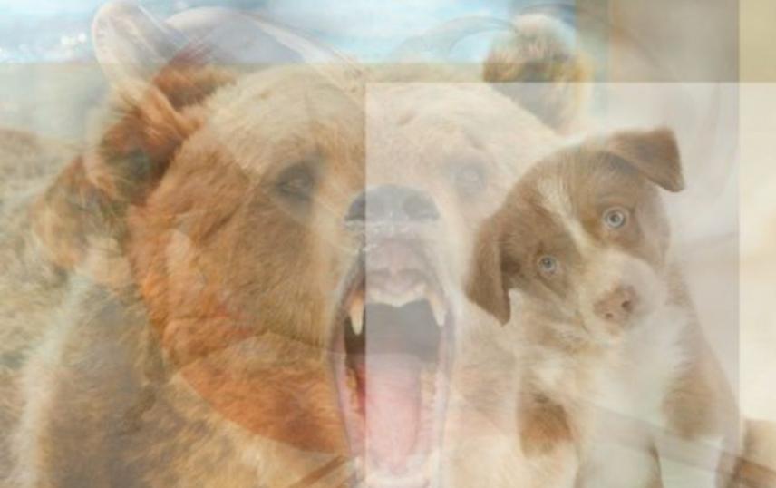 ქვიზი: მხოლოდ ძალიან ყურადღებიან ადამიანებს შეუძლიათ ამ ფოტოზე ყველა ცხოველის დანახვა (შეძლებ შენ?)